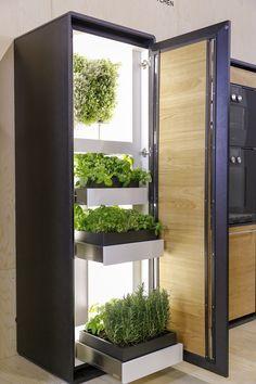 Zeleninu a bylinky jde pěstovat i v bytě. Řešením je chytrá domácí pěstírna